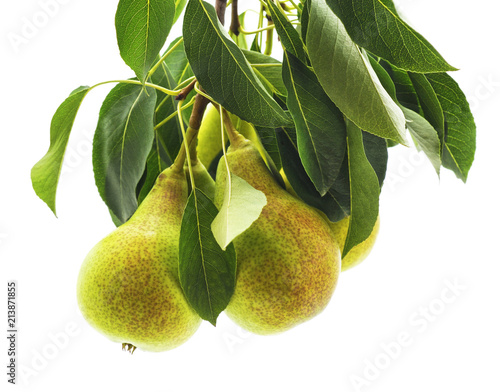 Green pear with leaf.