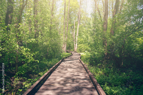 Spoed Fotobehang Weg in bos Wooden pathway through forest woods in the morning. Summer nature travel and journey concept