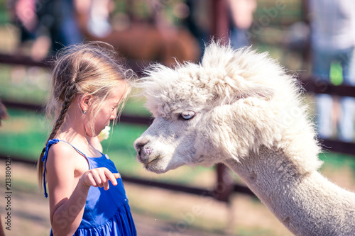Poster Lama Charming little girl is playing with cute alpaca in the park