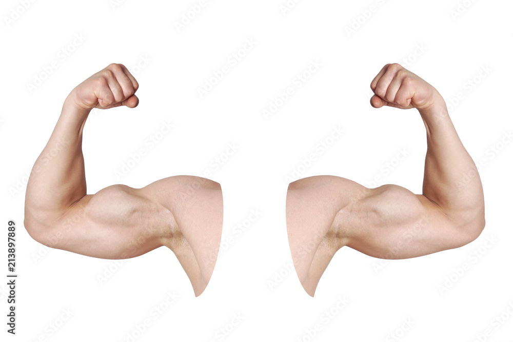 Fototapeta cut out male arms with flexed biceps muscles isolated on white