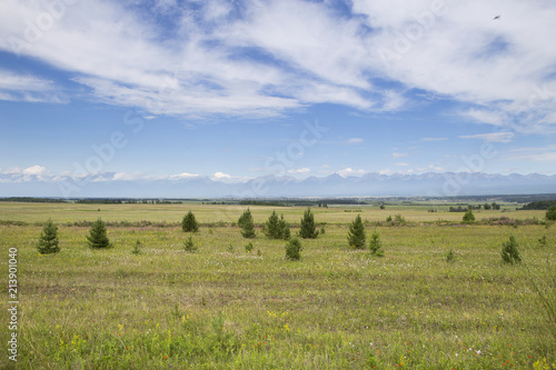 Fototapety, obrazy: View of the meadow and mountains