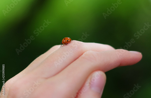 A ladybug on the hand.