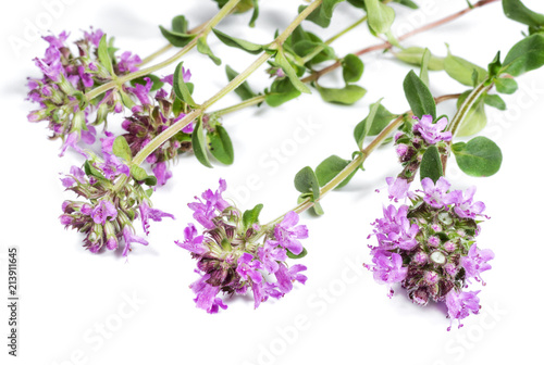 Recess Fitting Lilac Thyme on white background closeup