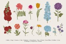 Big Set Flowers. Victorian Gar...