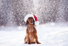 Adorable Dog Posing In A Santa Hat In Winter While It Snows