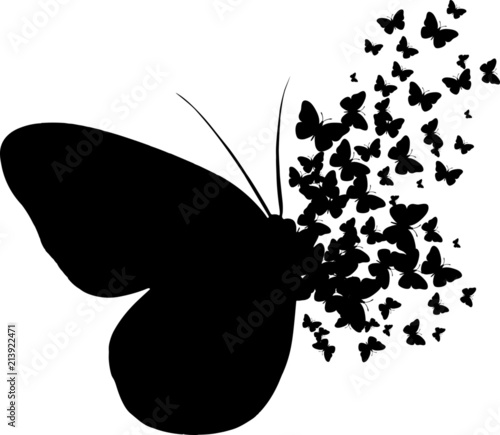 motyl-motyle