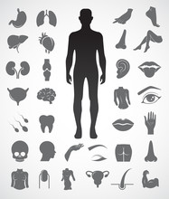 Collection Of Human Anatomy Ic...