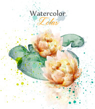 Beautiful Watercolor Lotus Flower Vector. Delicate Floral Decor