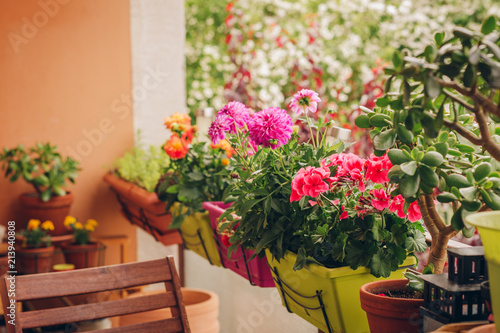 Photo Colorful flowers growing in pots on the balcony