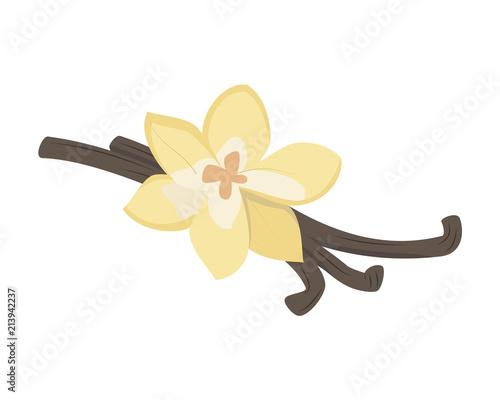 Fotografía Vector vanilla illustration isolated in cartoon style