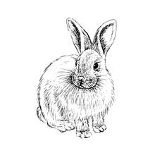 Rabbit Sketch. Hand Drawn Vect...