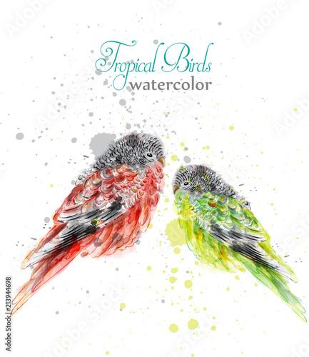 Małe ptaki w akwarela wektor. Tropikalne kolorowe słodkie papugi