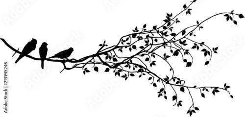 Obraz na płótnie Ast mit Vögel Silhouette