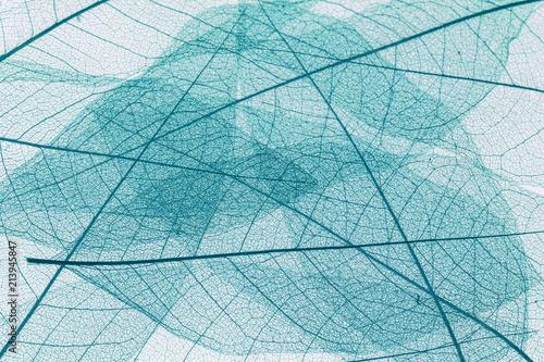 Cuadros en Lienzo fond de feuilles sèches translucides bleues