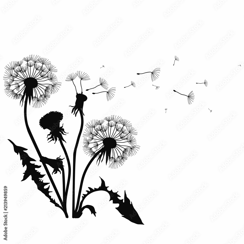 Fototapety, obrazy: Silhouette of a dandelion with flying seeds. Black contour of a dandelion. Black and white illustration of a flower. Summer plant.