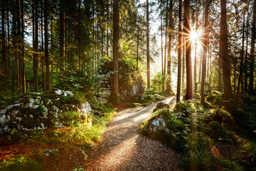 Magical scenic and pathway through woods in the morning sun.