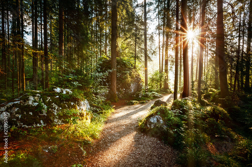 Poster Bossen Magical scenic and pathway through woods in the morning sun.
