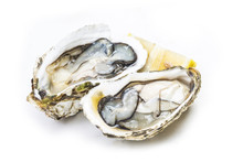 Oysters In The White Background