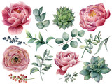 Fototapeta Kwiaty - Watercolor peony, succulent and ranunculus floral set. Hand painted red and blue berry, eucalyptus leaves isolated on white background. Illustration for design, print.