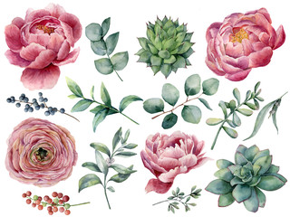 FototapetaWatercolor peony, succulent and ranunculus floral set. Hand painted red and blue berry, eucalyptus leaves isolated on white background. Illustration for design, print.