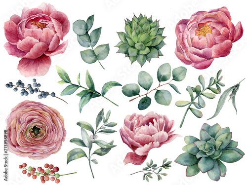 Photo  Watercolor peony, succulent and ranunculus floral set