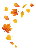 Colorful Autumn Leaves, Isolated On A White