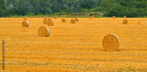 field of yellow wheat with hay bales on hills around Parma, Italy Wallpaper Mural