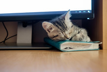 Kitten Sleeping Under Computer...
