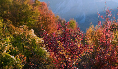 Autumn trees with red and yellow leaves against the background of mountains. Selective focus.