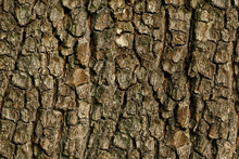 Texture Of The Bark Of The Tree