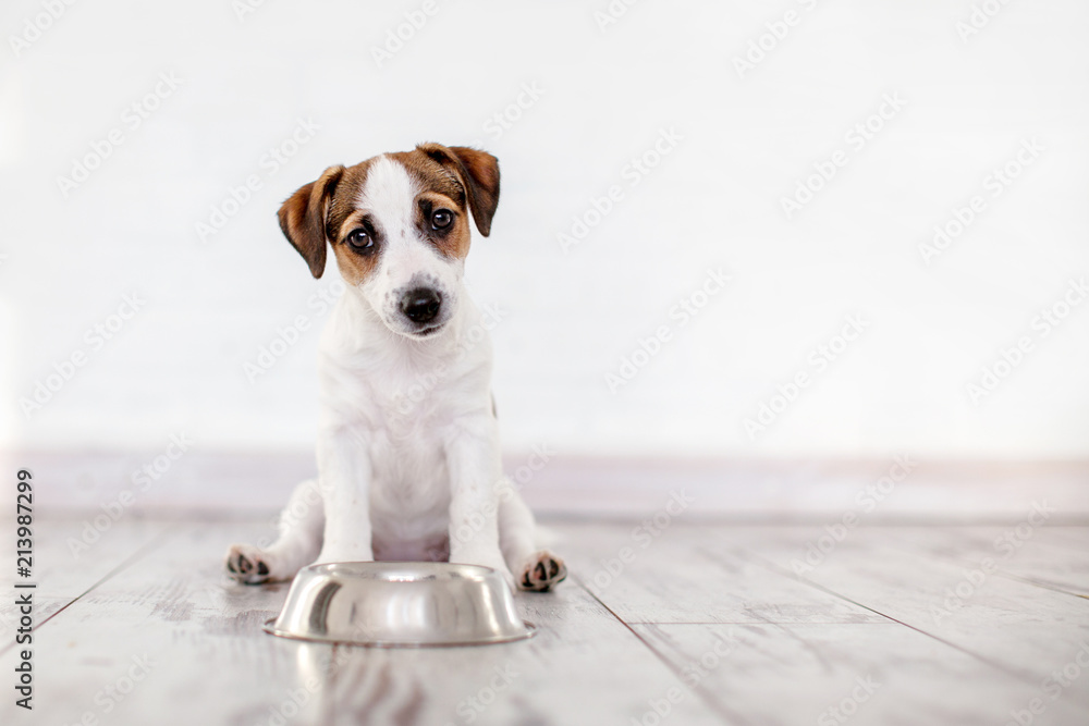 Fototapety, obrazy: Puppy eating food from bowl