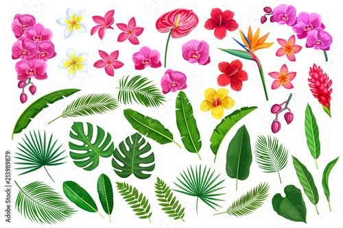 Obraz tropical leaves and flowers - fototapety do salonu
