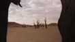 Dolly through dead tree revealing the Dead Vlei of Namibia, Wide shot, slider