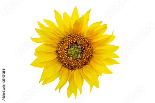 In de dag Zonnebloem One sunflower close up isolated on white background