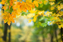 Soft Autumn Background With Leaves