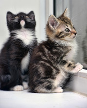 Two Small Kittens On The Windo...