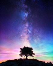 Starry Night  - Lonely Tree Wi...