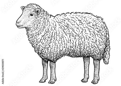 Fototapeta premium Ilustracja owiec, rysunek, grawerowanie, atrament, grafika liniowa, wektor