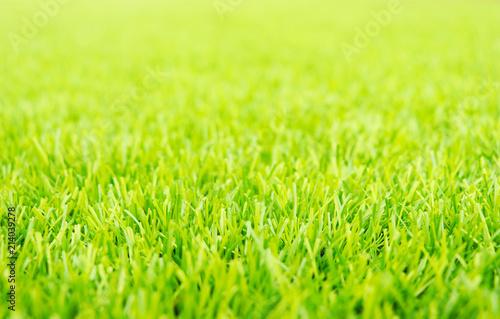 Obraz green grass background. - fototapety do salonu