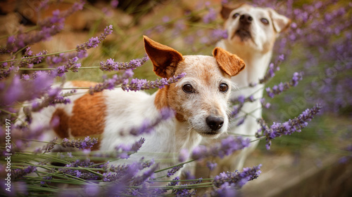 Obraz 