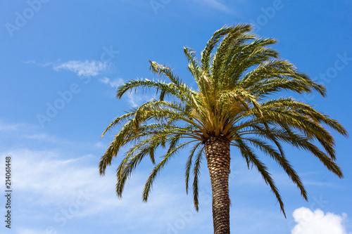 Spoed Foto op Canvas Palm boom green palm tree over blue sky