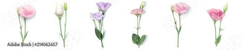 Cadres-photo bureau Fleuriste Floral frame or border of eustoma flowers isolated on white background