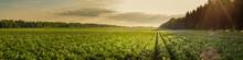 Summer Agricultural Landscape....