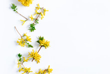 Border Frame Made Of Yellow Forsythia Flowers On A White Background