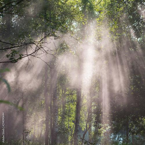 drzewa-w-promieniach-slonca