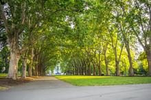 Carlton Garden, Melbourne