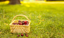 Basket With Red Cherries On Gr...
