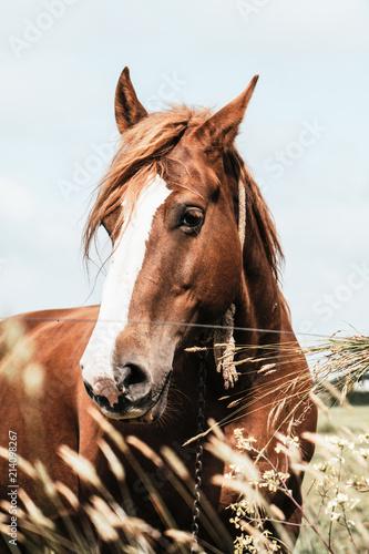 Foto  poney
