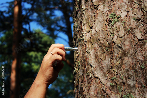 Fototapeta a man fastens a ring to the pine for fixing a person and flogging
