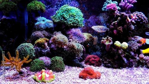 Carta da parati Saltwater dream coral reef aquarium tank scene